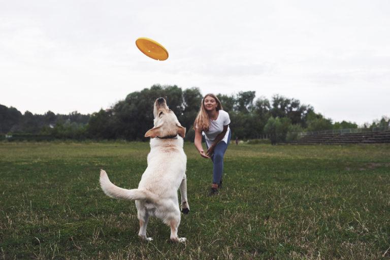 A importância de exercitar o seu cão