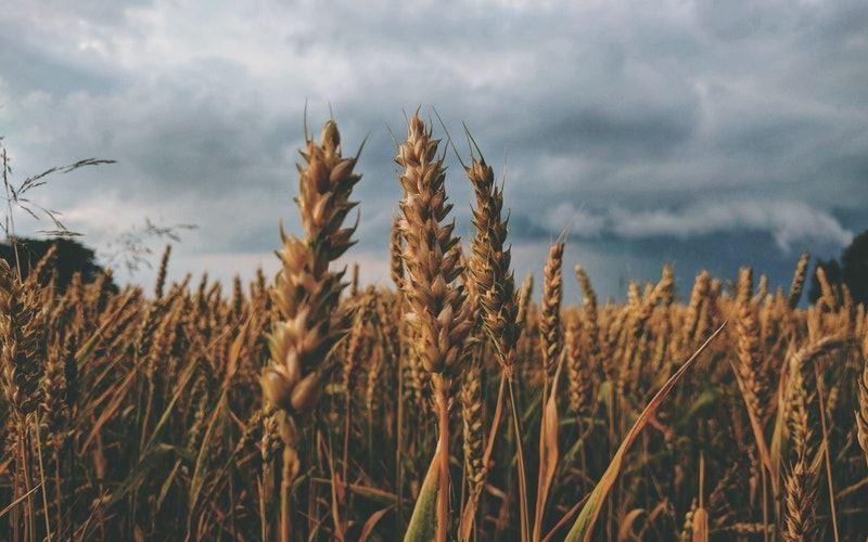 agricultura organica vantagens